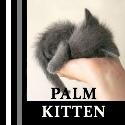 Palmkitten